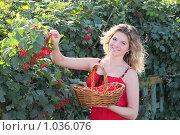 Купить «Девушка собирает калину», фото № 1036076, снято 15 августа 2009 г. (c) Майя Крученкова / Фотобанк Лори