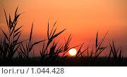 Купить «Силуэт травы на закате», фото № 1044428, снято 22 октября 2018 г. (c) SummeRain / Фотобанк Лори