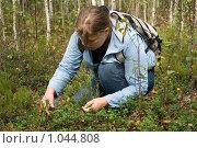 Купить «Девушка собирает бруснику в лесу», фото № 1044808, снято 12 августа 2009 г. (c) Сергей Васильев / Фотобанк Лори