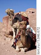 Купить «Два верблюда  на фоне красных скал», фото № 1046672, снято 26 ноября 2008 г. (c) Irina Opachevsky / Фотобанк Лори