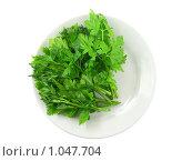 Купить «Свежая зелень - петрушка на белой тарелке», фото № 1047704, снято 8 июня 2009 г. (c) Vitas / Фотобанк Лори