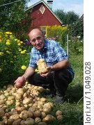 Купить «Рекордный урожай картошки», фото № 1049028, снято 22 августа 2009 г. (c) Донцов Евгений Викторович / Фотобанк Лори