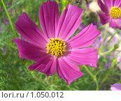 Купить «Красный цветок», фото № 1050012, снято 8 августа 2007 г. (c) Сергей Емельянов / Фотобанк Лори