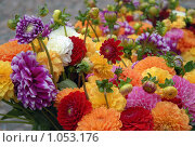 Купить «Георгинов цвет», эксклюзивное фото № 1053176, снято 22 июля 2009 г. (c) Svet / Фотобанк Лори