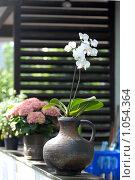 Купить «Орхидея  в кувшине», эксклюзивное фото № 1054364, снято 24 июля 2009 г. (c) Svet / Фотобанк Лори