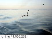 Купить «Чайка над морем», фото № 1056232, снято 22 августа 2009 г. (c) Сергей Тундра / Фотобанк Лори