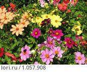 Смесь георгинов и разных цветов. Стоковое фото, фотограф Iv Merlu / Фотобанк Лори