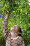 Мальчик собирает яблоки, фото № 1059012, снято 29 августа 2009 г. (c) Елена Блохина / Фотобанк Лори