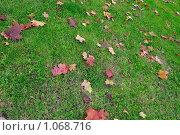 Купить «Осенние листья», фото № 1068716, снято 1 сентября 2009 г. (c) Светлана Соколова / Фотобанк Лори