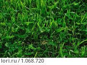 Зеленая трава. Стоковое фото, фотограф Светлана Соколова / Фотобанк Лори