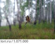 Паук и паутина. Стоковое фото, фотограф Михаил Дозоров / Фотобанк Лори