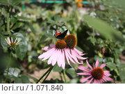 Цветы. Стоковое фото, фотограф ПАВЕЛ ЧУПРИНА / Фотобанк Лори