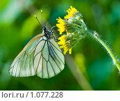 Бабочка на цветке. Стоковое фото, фотограф Артём Картушин / Фотобанк Лори