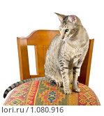 Кот-подросток ориентальной породы. Стоковое фото, фотограф Хижняк Екатерина / Фотобанк Лори