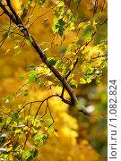 Ветер. Стоковое фото, фотограф Андрей Сучков / Фотобанк Лори