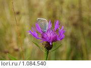 Бабочка. Стоковое фото, фотограф Виктор Агеев / Фотобанк Лори