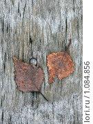 Листья на старой скамье. Стоковое фото, фотограф Андрей Сучков / Фотобанк Лори
