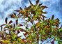 Каштан осенью, эксклюзивное фото № 1088644, снято 4 сентября 2009 г. (c) lana1501 / Фотобанк Лори