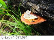 Купить «Упавший на грибную шляпку лист», фото № 1091084, снято 23 августа 2009 г. (c) Данил Ефимов / Фотобанк Лори
