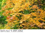 Купить «Осенний лес», фото № 1091692, снято 13 сентября 2009 г. (c) Stepanuk Valera / Фотобанк Лори