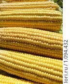 Купить «Початки кукурузы», фото № 1094432, снято 21 августа 2009 г. (c) Татьяна Баранова / Фотобанк Лори