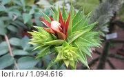 Ботанический сад. Субтропики. Стоковое фото, фотограф Дмитрий Горбик / Фотобанк Лори