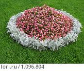 Купить «Клумба в парке», фото № 1096804, снято 3 сентября 2009 г. (c) Алла Виноградова / Фотобанк Лори