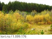 Золотая осень. Стоковое фото, фотограф 1 / Фотобанк Лори