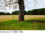 Полянка для отдыха под деревом. Стоковое фото, фотограф 1 / Фотобанк Лори