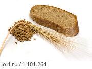 Купить «Зерна и колос ячменя и кусок хлеба», фото № 1101264, снято 6 декабря 2007 г. (c) Роман Иващенко / Фотобанк Лори