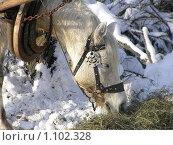 Купить «Лошадь, зима», фото № 1102328, снято 6 января 2009 г. (c) Татьяна Баранова / Фотобанк Лори