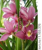 Орхидеи. Стоковое фото, фотограф Татьяна Давыдова / Фотобанк Лори