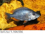 Купить «Рыбка», фото № 1104556, снято 9 августа 2008 г. (c) Мария Виноградова / Фотобанк Лори