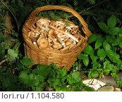 Купить «Опята в корзинке», фото № 1104580, снято 30 августа 2009 г. (c) Анна Лукина / Фотобанк Лори