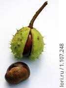 Купить «Плоды каштана», фото № 1107248, снято 20 сентября 2009 г. (c) Людмила Травина / Фотобанк Лори