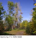 Купить «Осенний красочный пейзаж», фото № 1109568, снято 20 сентября 2009 г. (c) Андрей Ижаковский / Фотобанк Лори