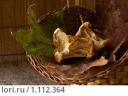 Сухофрукты из яблок. Стоковое фото, фотограф Наталья Ревкина / Фотобанк Лори