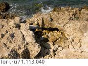 Морской прибой. Стоковое фото, фотограф Виктор Косьянчук / Фотобанк Лори