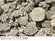 Купить «Кораллы», фото № 1117540, снято 8 сентября 2008 г. (c) Анатолий Никитин / Фотобанк Лори