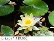 Купить «Водяная лилия», фото № 1119060, снято 7 августа 2009 г. (c) Вероника Галкина / Фотобанк Лори