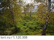 Осенний лес. Стоковое фото, фотограф Виктор Ковалев / Фотобанк Лори