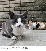 Кот и кошка на фоне кирпичной стены. Стоковое фото, фотограф Екатерина Шашнина / Фотобанк Лори