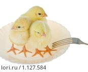 Купить «Цыплята на тарелке», фото № 1127584, снято 16 сентября 2007 г. (c) Алексей Ухов / Фотобанк Лори