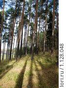Купить «Сосновый бор вокруг города Очер, Пермский край», фото № 1128048, снято 26 сентября 2009 г. (c) Чернышева Лариса / Фотобанк Лори