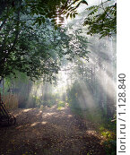 Купить «Лучи солнца», фото № 1128840, снято 2 августа 2004 г. (c) Ирина Кожемякина / Фотобанк Лори