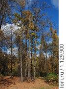 Купить «Осенний лес», эксклюзивное фото № 1129900, снято 3 октября 2009 г. (c) lana1501 / Фотобанк Лори