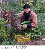 Купить «Девушка выкопала гладиолусы», фото № 1131864, снято 4 октября 2009 г. (c) Кристина Викулова / Фотобанк Лори