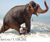 Слон купается в море (2008 год). Редакционное фото, фотограф Павлов Борис / Фотобанк Лори