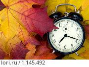 Купить «Время осени», фото № 1145492, снято 8 октября 2009 г. (c) Куликова Татьяна / Фотобанк Лори