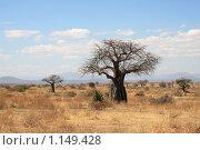 Африканский пейзаж: саванна и толстый старый баобаб. Стоковое фото, фотограф Димитрий Сухов / Фотобанк Лори